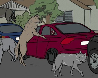 _105336105_wolves2